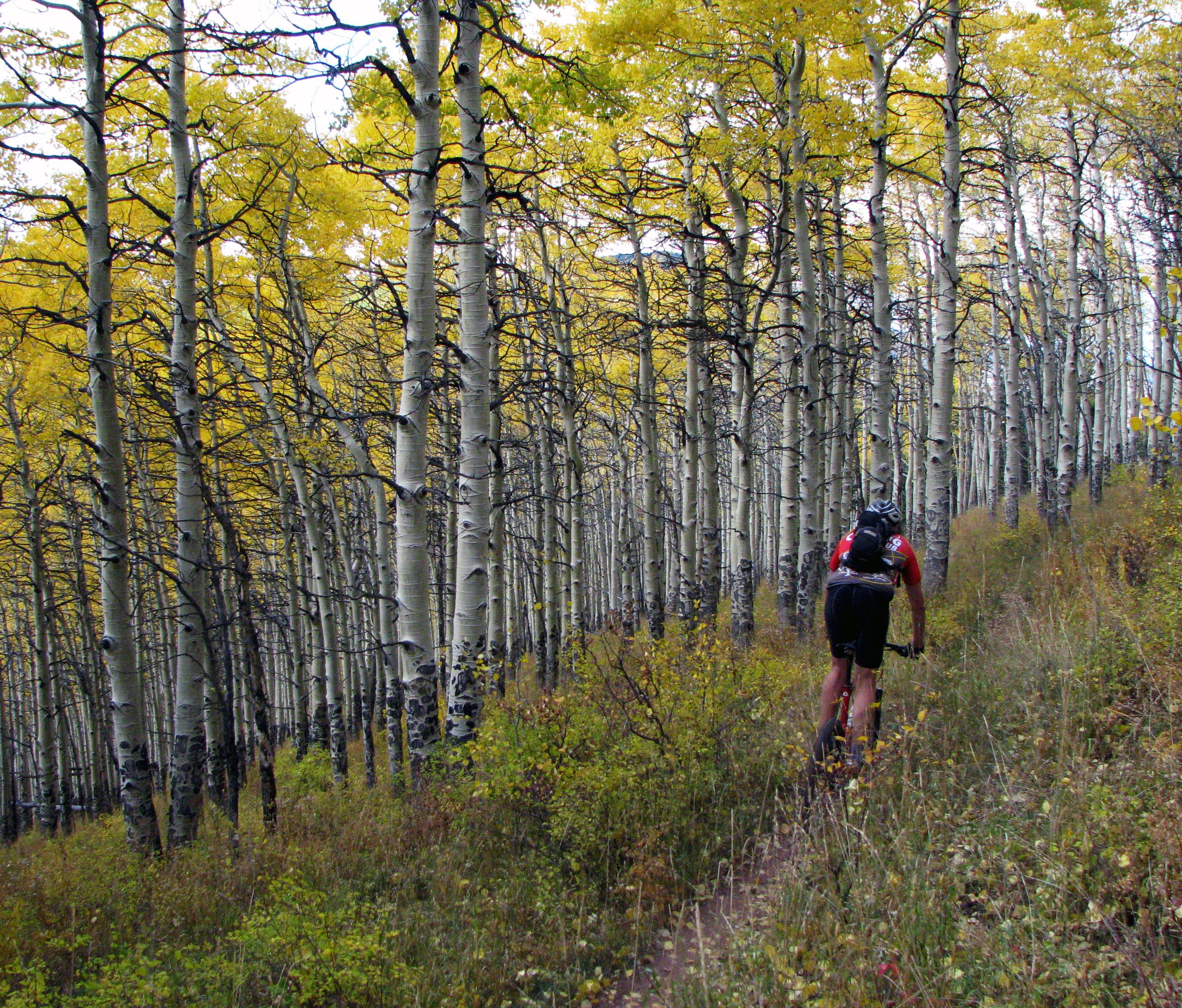 AK trail 01